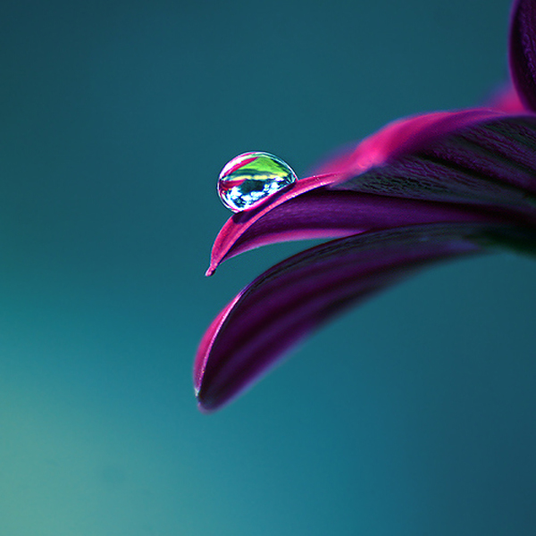 Water Drop Photography 36