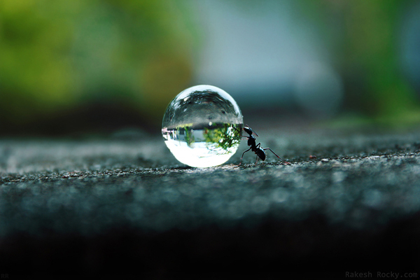 Water Drop Photography 40