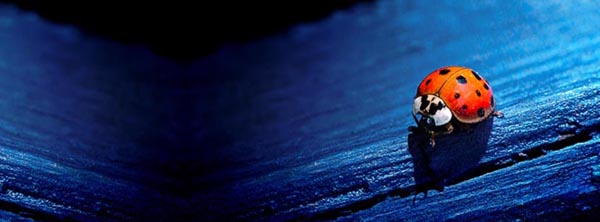 free facebook timeline covers - 6