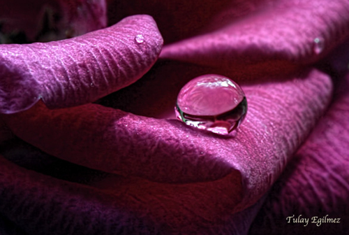 Water Drop Photography - 3