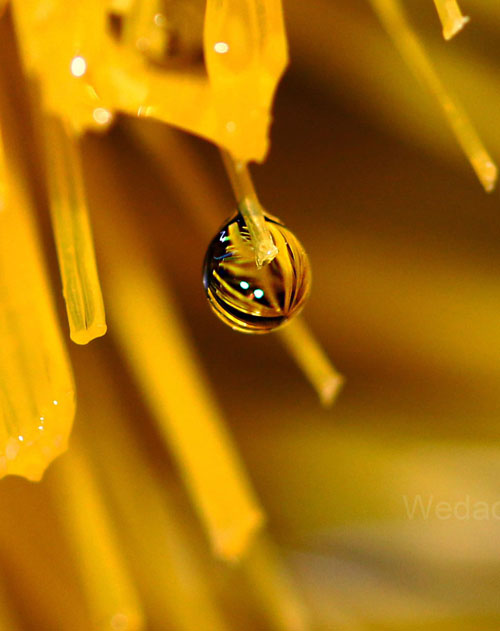 Water Drop Photography - 30
