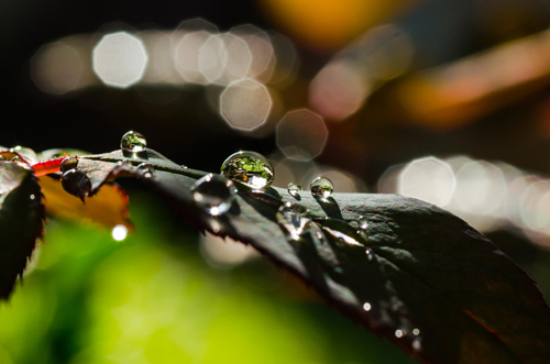 Water Drop Photography - 6