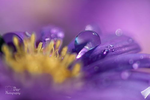 Water Drop Photography - 9