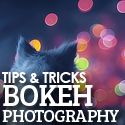 Post thumbnail of Tips & Techniques for Better Bokeh Photography