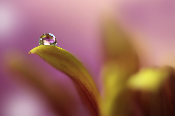Water Drop Photography - 12
