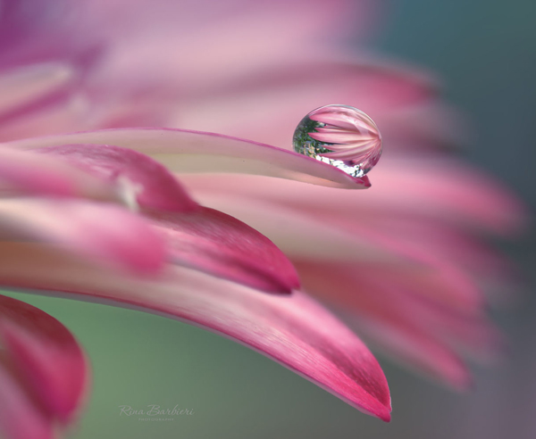 Water Drop Photography - 1