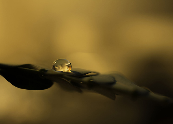 Water Drop Photography - 21