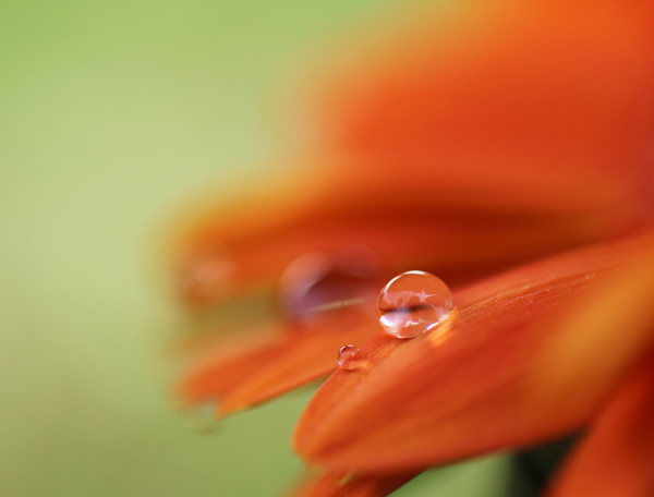 Water Drop Photography - 22