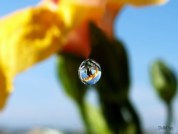 Water Drop Photography - 24