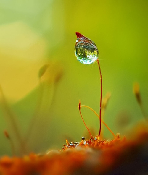 Water Drop Photography - 27