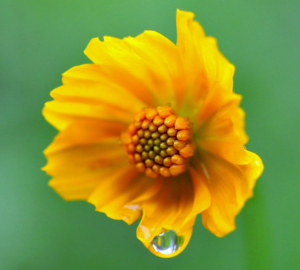 Water Drop Photography - 28