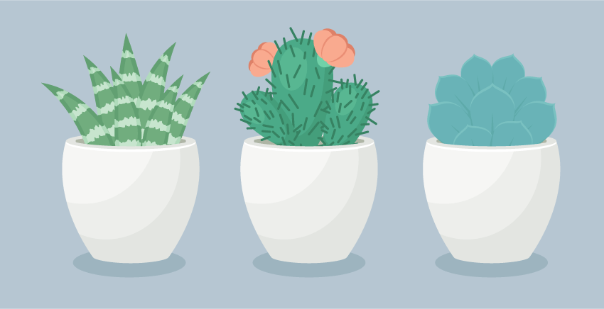 How to Create a Trio of Succulents in Adobe Illustrator