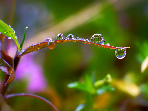 Beautiful Examples Of Water Drop Photography - 11