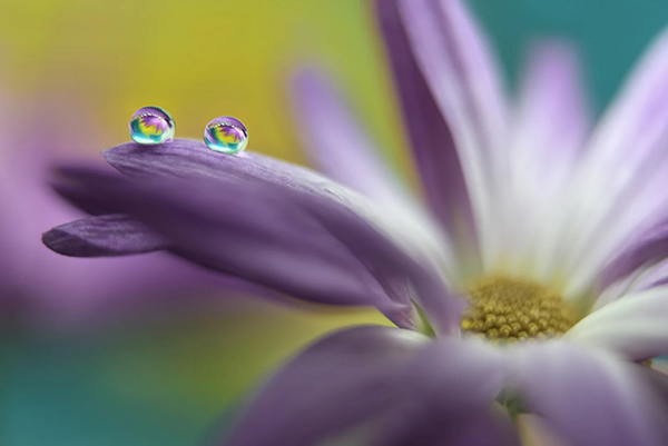 Beautiful Examples Of Water Drop Photography - 2
