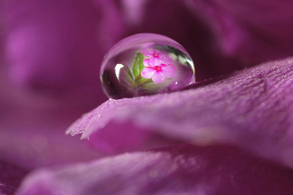Beautiful Examples Of Water Drop Photography - 21