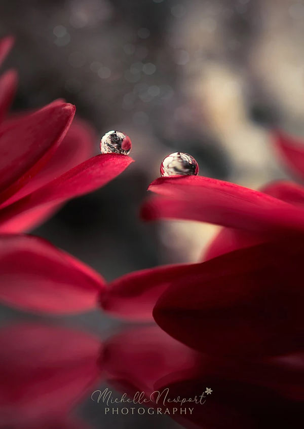 Beautiful Examples Of Water Drop Photography - 32