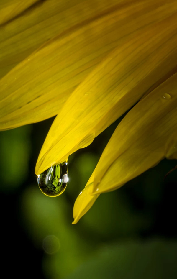 Beautiful Examples Of Water Drop Photography - 35