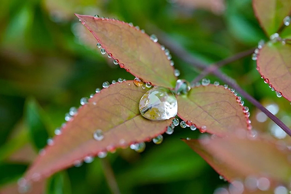 Beautiful Examples Of Water Drop Photography - 9