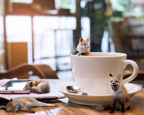 How to Create a Fun Fox and Coffee Photo Manipulation in Photoshop