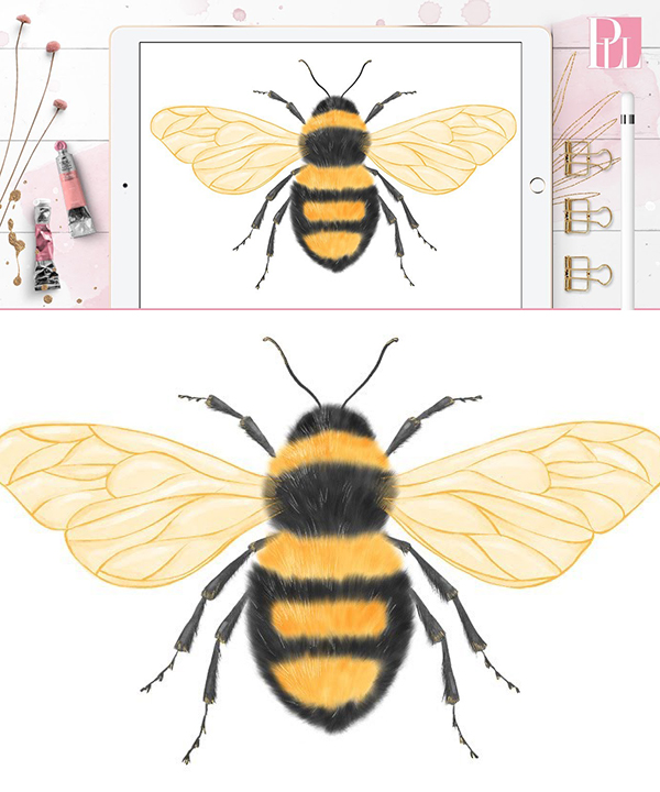 How to Draw a Bee Step by Step (Beginner) in Procreate Tutorial