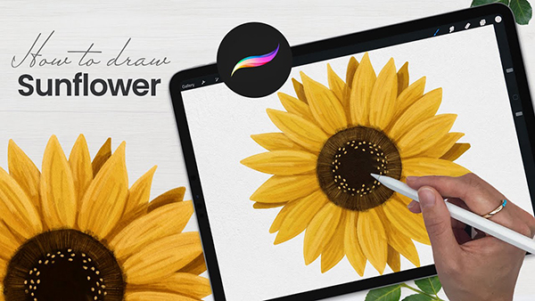 How To Draw Sunflower Drawing in Procreate Tutorial
